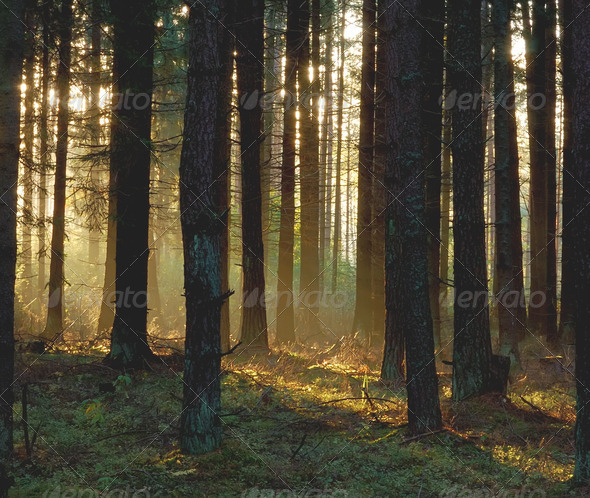 Autumn wood in the morning - Stock Photo - Images