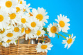 bouquet of daisies in a wicker basket - PhotoDune Item for Sale
