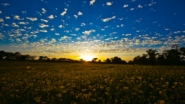 The Country Yellow Field Sunset