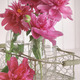 Closeup of peony flowers in bottles - PhotoDune Item for Sale