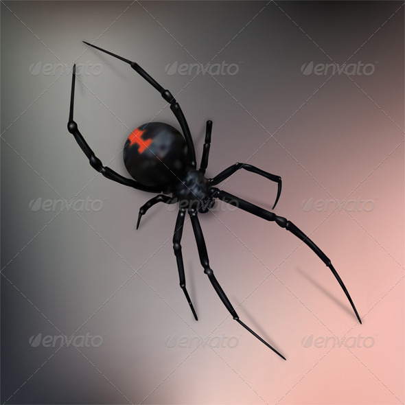 GraphicRiver Black Widow Spider 7014346