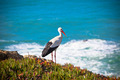 Stork on a Cliff at Western Coast of Portugal - PhotoDune Item for Sale