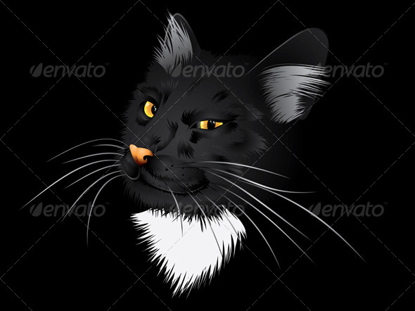 GraphicRiver Black Cat in the Dark 7018902