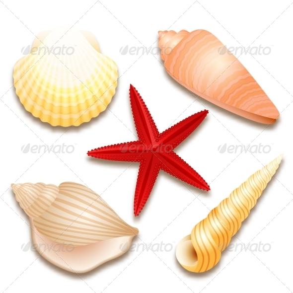 GraphicRiver Seashells Set and Starfish 7029862