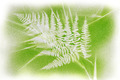Bracken and grass shapes - PhotoDune Item for Sale