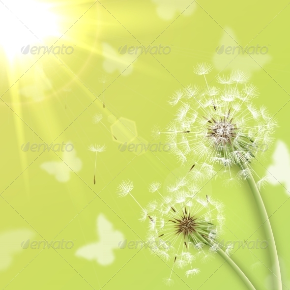 GraphicRiver White Dandelions with Summer Sun 7035789