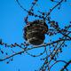 Inside Of Hornets Nest - PhotoDune Item for Sale