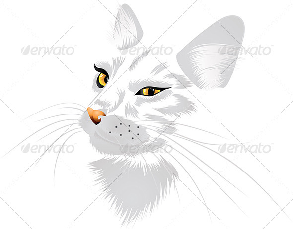 GraphicRiver White Cat with Yellow Eyes 7050697