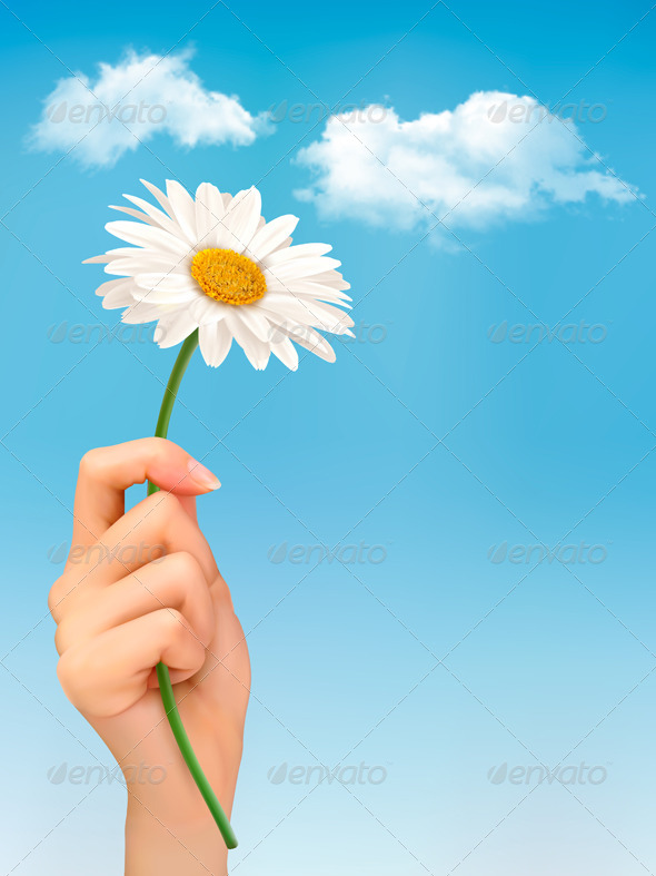GraphicRiver White Daisy in Front of the Blue Sky 7040008