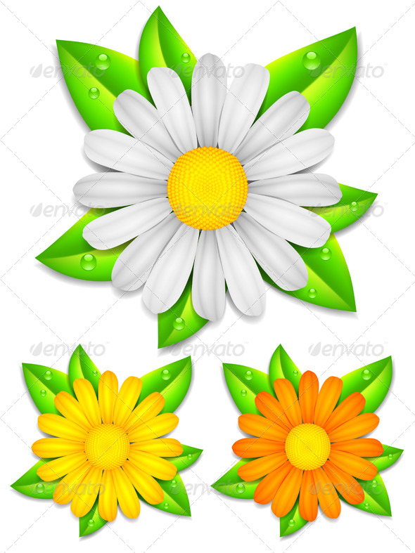 GraphicRiver Chamomile Flowers 7056743
