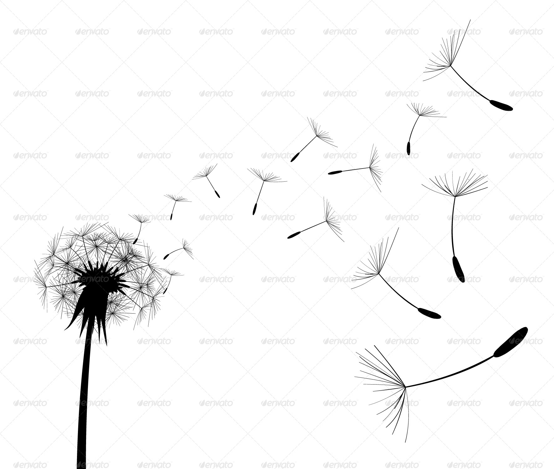 Dandelion black and white drawing the for Dandelion coloring page