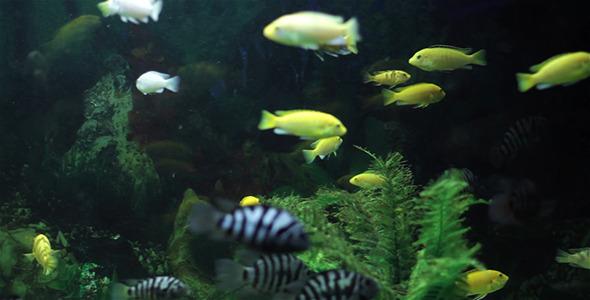 Aquarium Fish 5