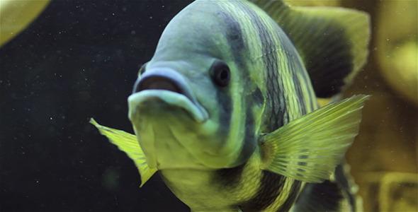 Aquarium Fish 9