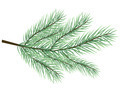 fur-tree branch vector - PhotoDune Item for Sale