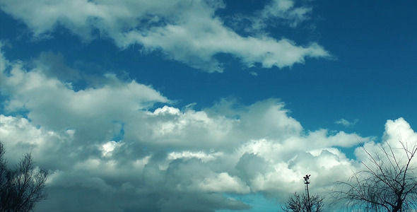 Soft Clouds and Plant