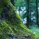 Tree Moss in Forest - VideoHive Item for Sale