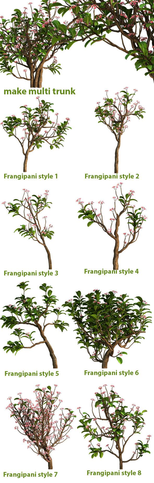 Frangipani Tree Drawing Frangipani Tree 3docean Item