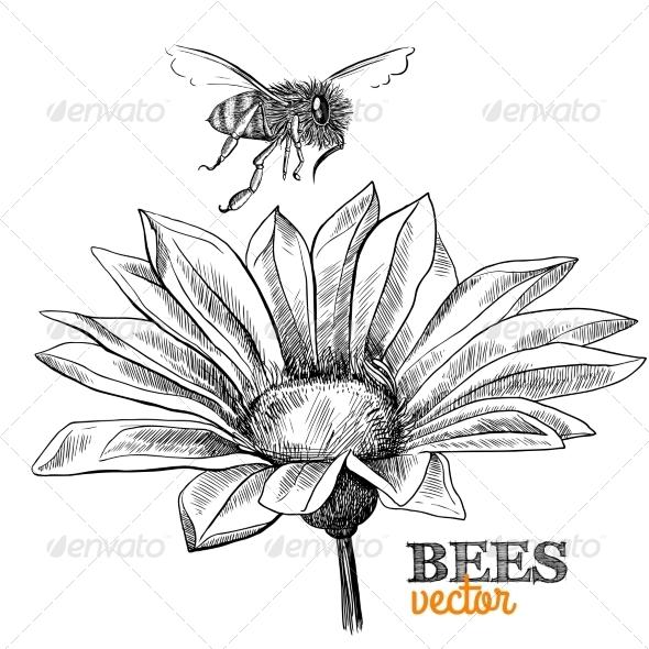GraphicRiver Honey Bee 7117611