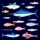 Edible Fishes - GraphicRiver Item for Sale