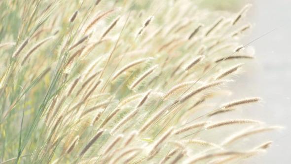 Grass Spring Field