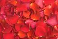 Valentine's petals pattern