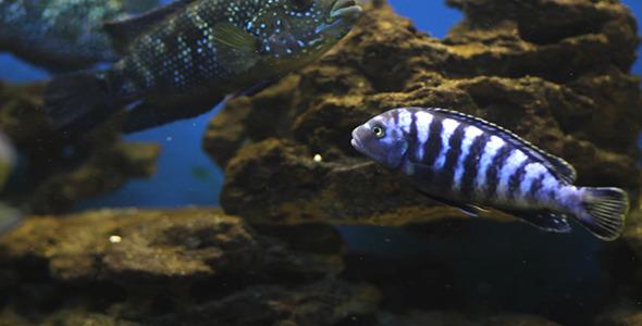 Aquarium Fish 15