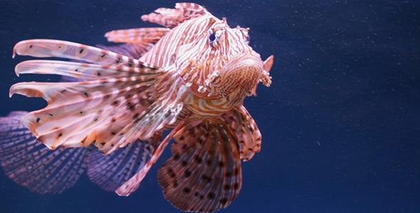 Aquarium Fish 18