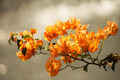 Beautiful Orange Flower - PhotoDune Item for Sale