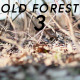 Old Forest 3 - VideoHive Item for Sale