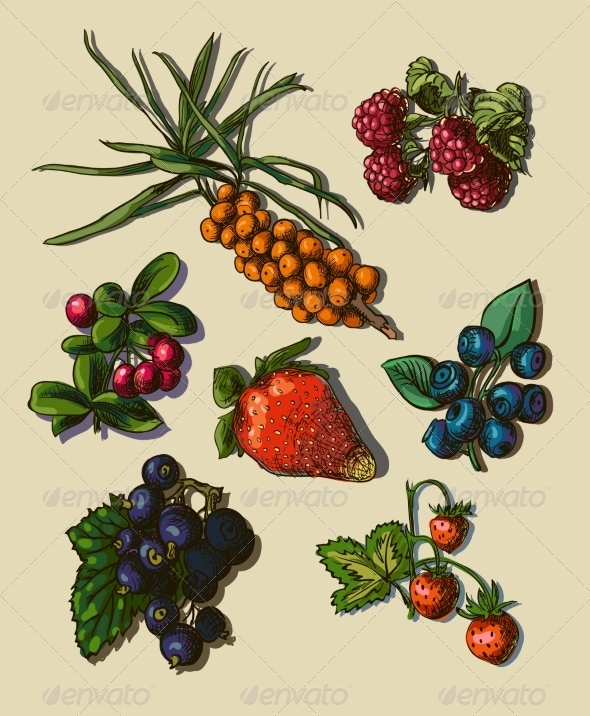 GraphicRiver Illustration Set of Berries 7159698