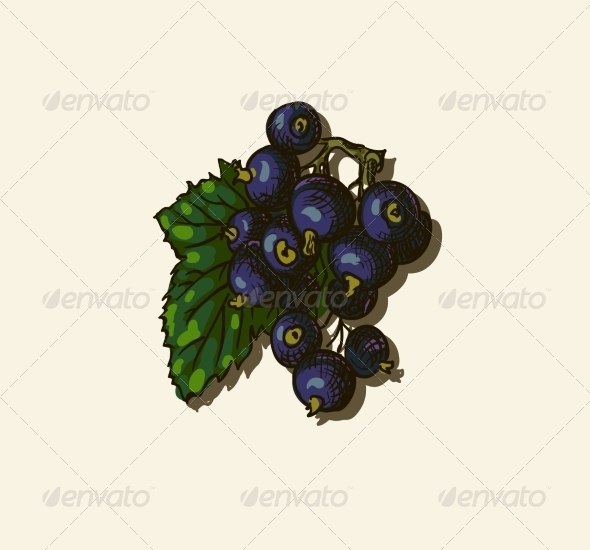 GraphicRiver Illustration of Blackcurrant 7159699