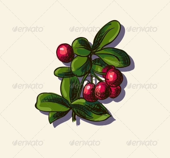 GraphicRiver Illustration of Cowberry 7159703