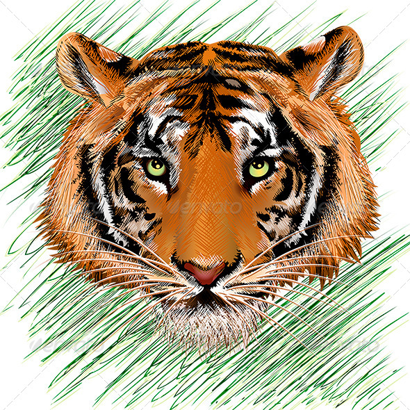 GraphicRiver Tiger Sketch 7165068