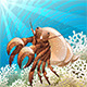 Hermit Crab - GraphicRiver Item for Sale