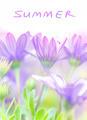 Summer fresh flowers - PhotoDune Item for Sale