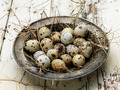 quail eggs - PhotoDune Item for Sale