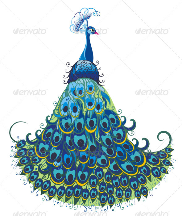 GraphicRiver Peacock 7177739