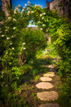 Summer garden and path - PhotoDune Item for Sale