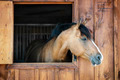 Horse in stable - PhotoDune Item for Sale