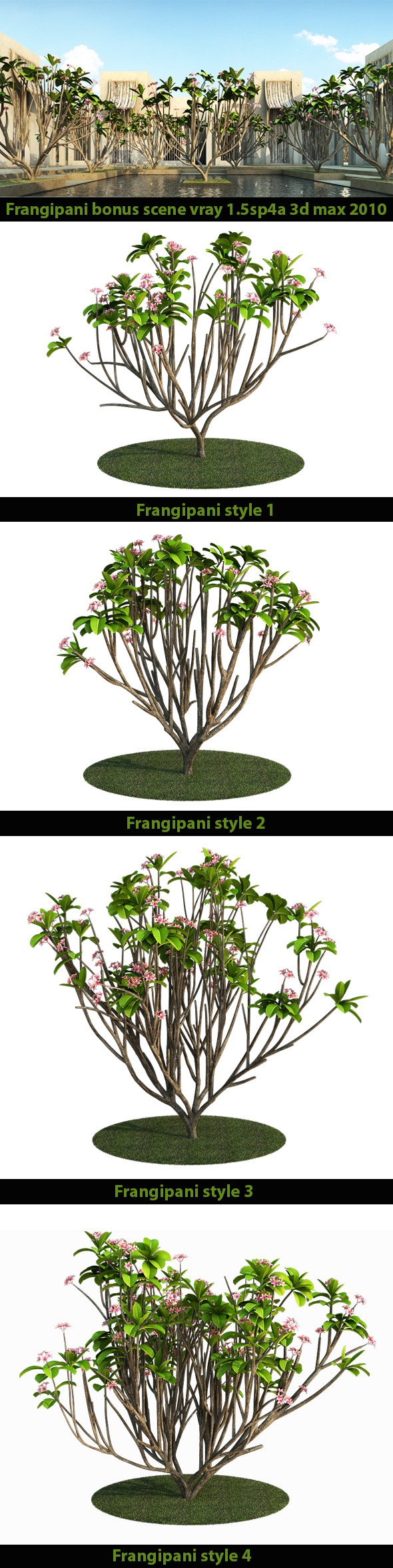 Frangipani Tree v.2 - 3DOcean Item for Sale