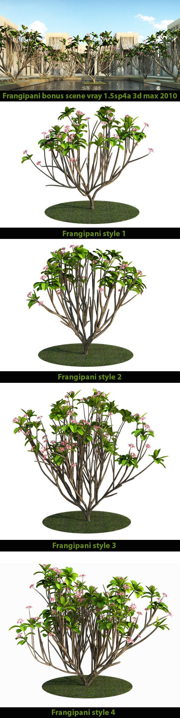3DOcean Frangipani Tree v.2 7185729