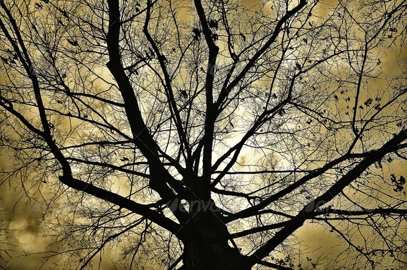 Tree in Silhouette - Stock Photo - Images