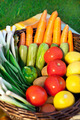 Harvest Of Fresh Vegetables in a Basket  - PhotoDune Item for Sale