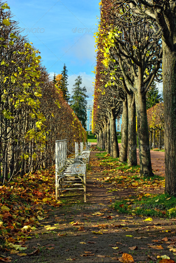 The alley with benches in Catherine park in Pushkin, Russia - Stock Photo - Images