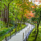 Chisen-kaiyushiki, Pond-stroll garden in Ginkaku-ji temple in Kyoto - PhotoDune Item for Sale