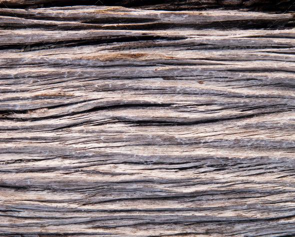 Drift Wood - Stock Photo - Images