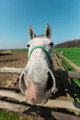 Fisheye funny horse portrait - PhotoDune Item for Sale