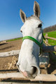 Fisheye lens horse portrait - PhotoDune Item for Sale