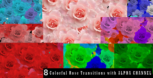 Rose Transition