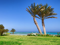 Palm beach in Marsa Alam, tropical paradise. Egypt - PhotoDune Item for Sale
